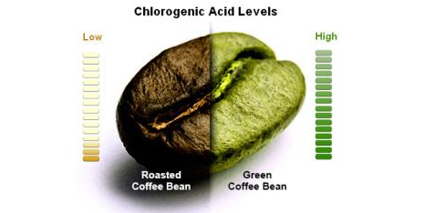 chlorogenic acid levels
